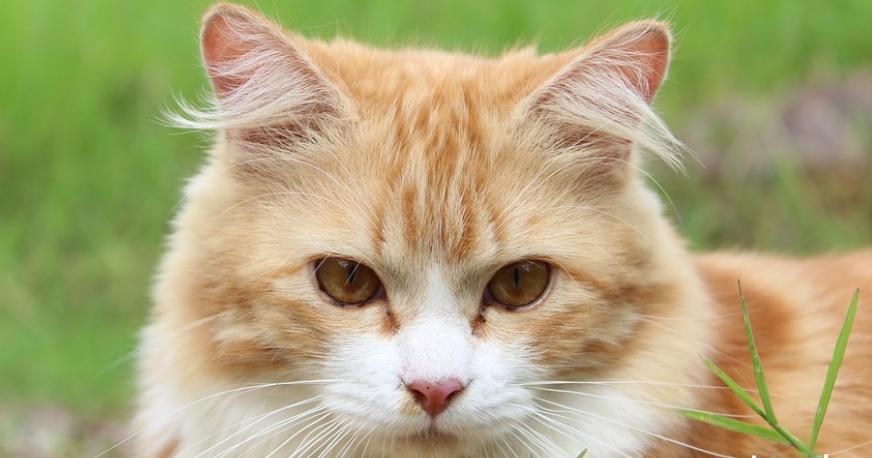 500 Nama Lucu Kucing Jantan Dan Betina A Z Caraqu