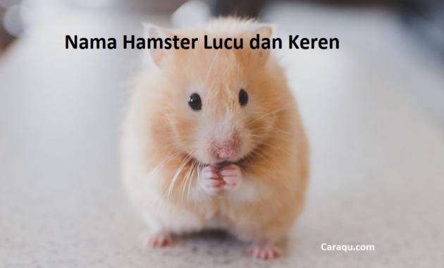Nama Hamster Lucu Jantan dan Betina